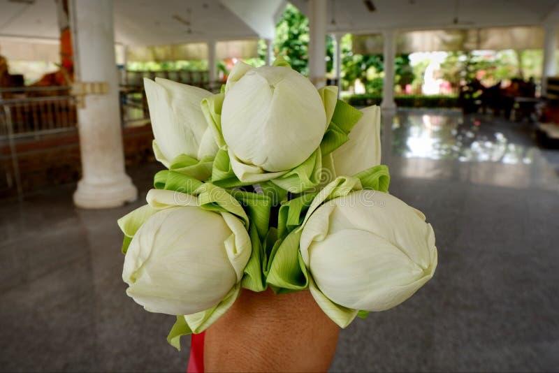 Цветок лотоса поклонен лордом Буддой стоковые изображения rf