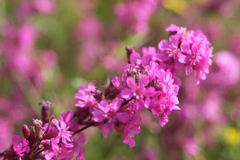 Цветок луга в лете стоковая фотография rf