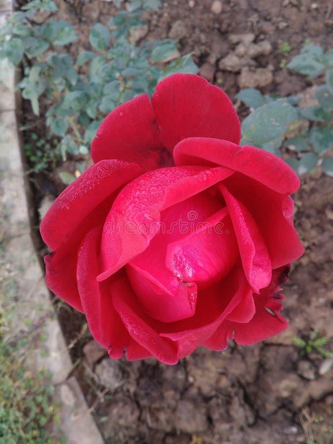 Цветок любов стоковое изображение rf
