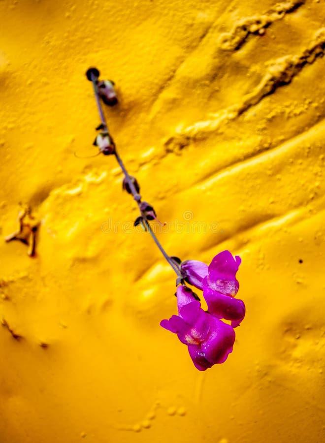 Цветок макроса стоковые изображения rf