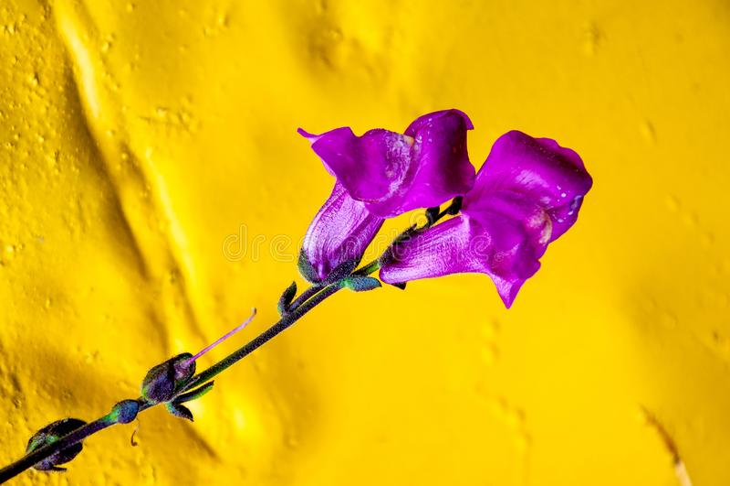 Цветок макроса стоковая фотография rf