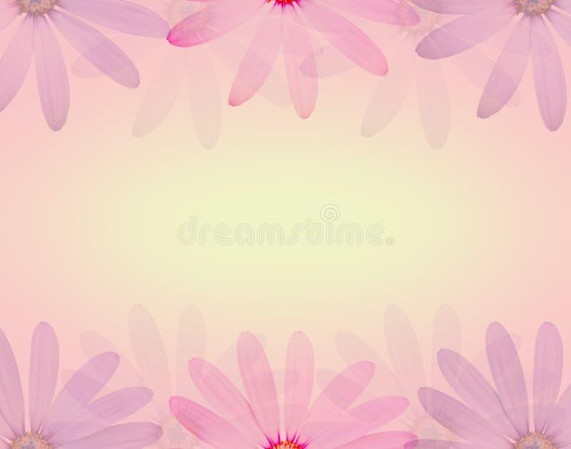 Цветок маргаритки в мягком сладостном цвете и нерезкость вводят предпосылку в моду текстуры бесплатная иллюстрация