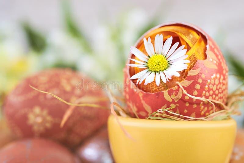 Цветок маргаритки в треснутом пасхальном яйце на абстрактном backg весеннего времени стоковая фотография rf