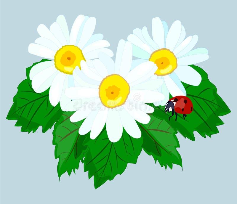 Цветок маргаритки лета природы с ladybug r бесплатная иллюстрация