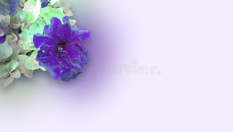 Цветок мягкой весны фиолетовые и листья предпосылка, обои стоковые фотографии rf