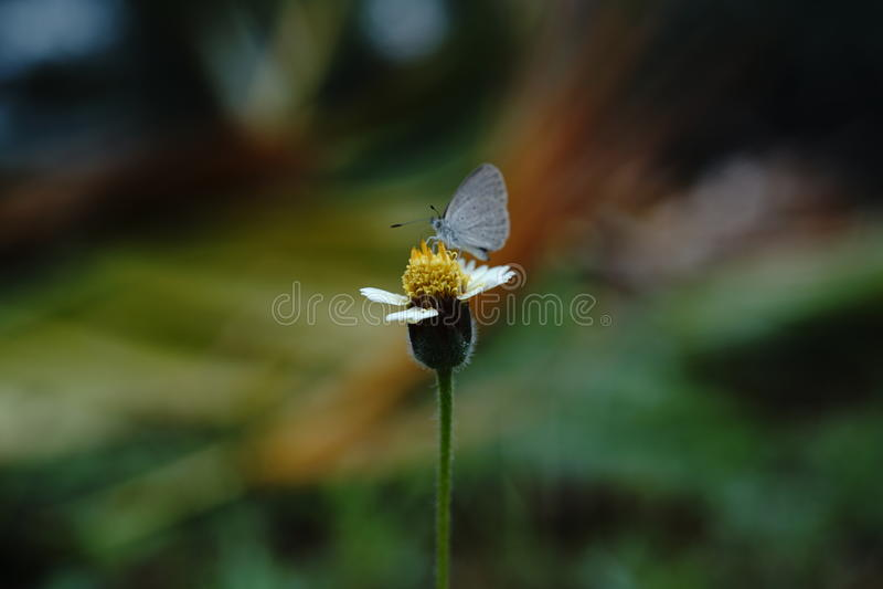 Цветок насекомого стоковое фото rf
