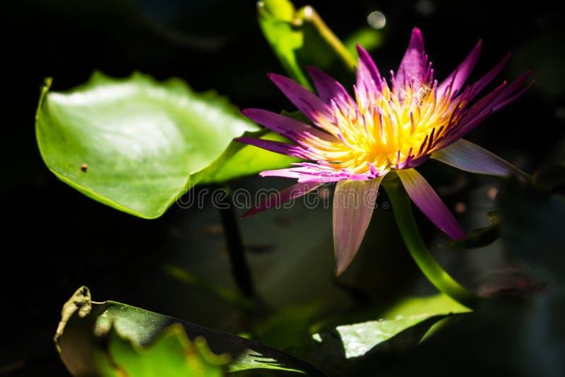 Цветок на воде в глиняном горшке стоковое изображение rf