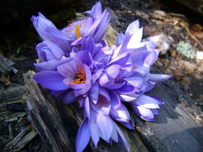 Цветок на журнале стоковые фотографии rf