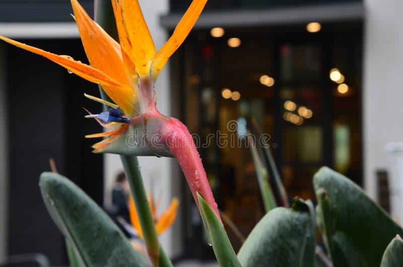 Цветок на заднем плане внешних витрин магазина Сан-Франциско стоковое изображение