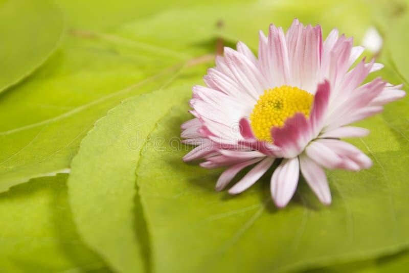 Цветок на листьях стоковая фотография