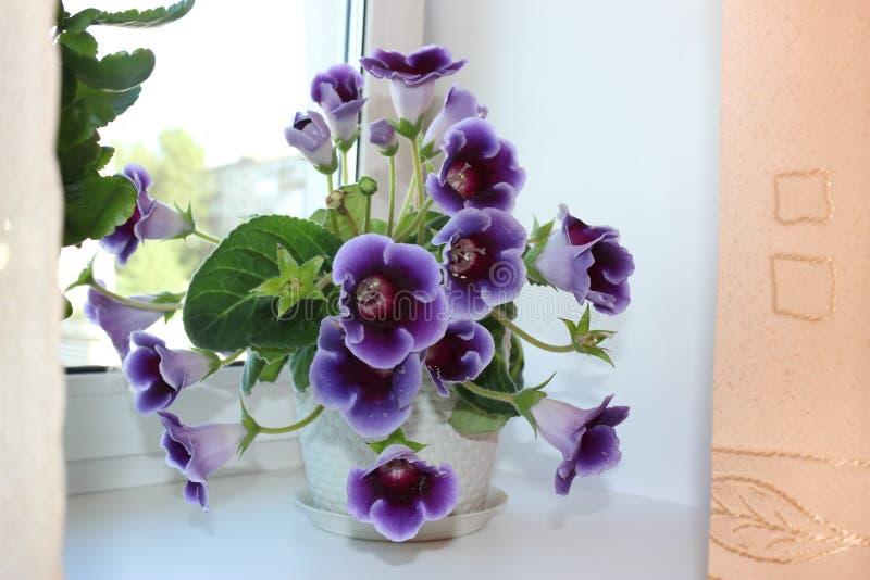 Цветок на окне стоковые фото