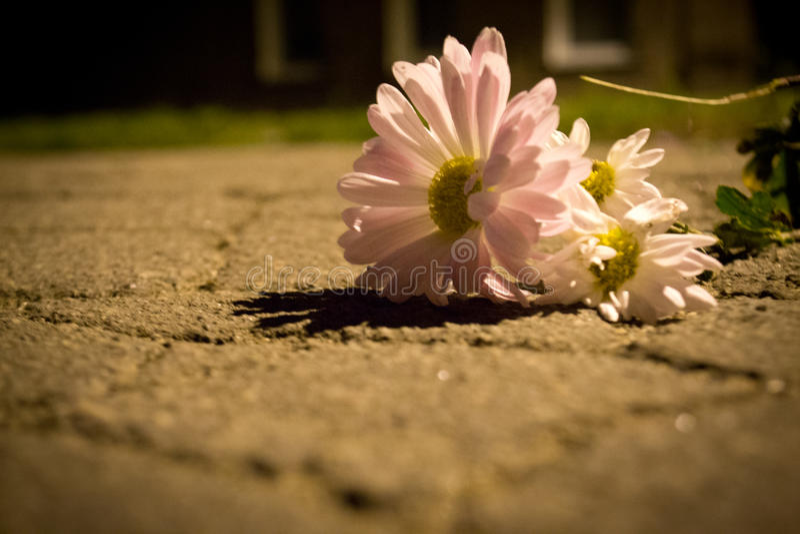 Цветок на дороге стоковая фотография