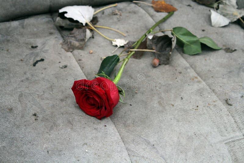 Цветок на получившемся отказ месте стоковое фото rf