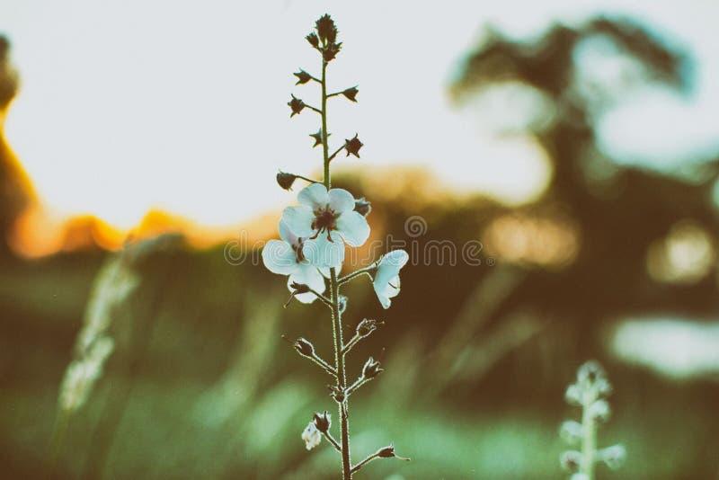 Цветок на сумраке