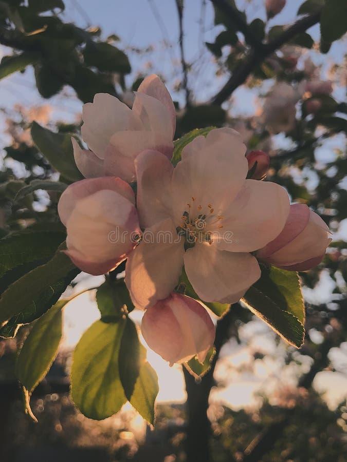 Цветок на cky стоковые изображения