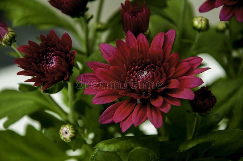 цветок немногая стоковое изображение