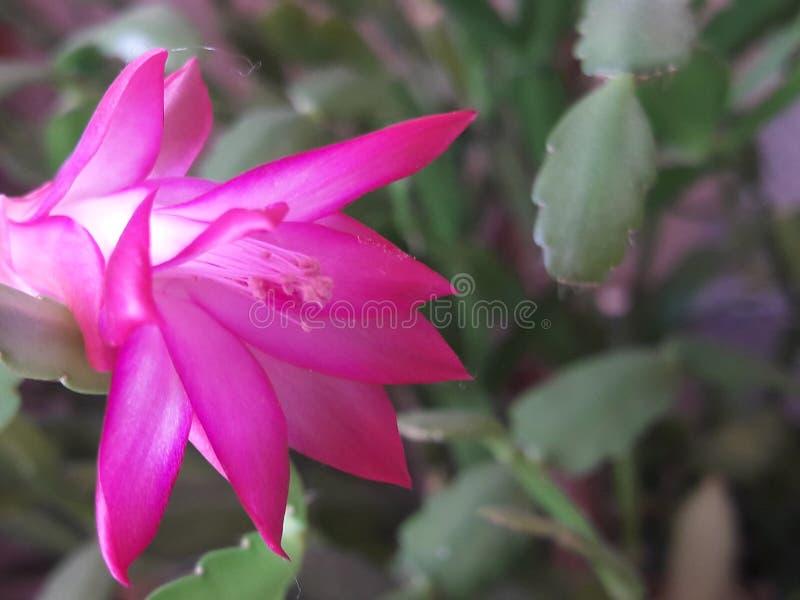цветок немногая стоковая фотография rf