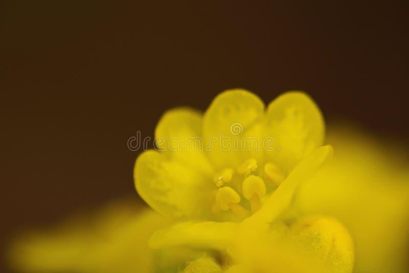 цветок немногая стоковое фото