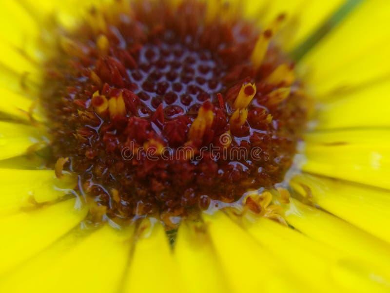 цветок ненастный стоковые изображения