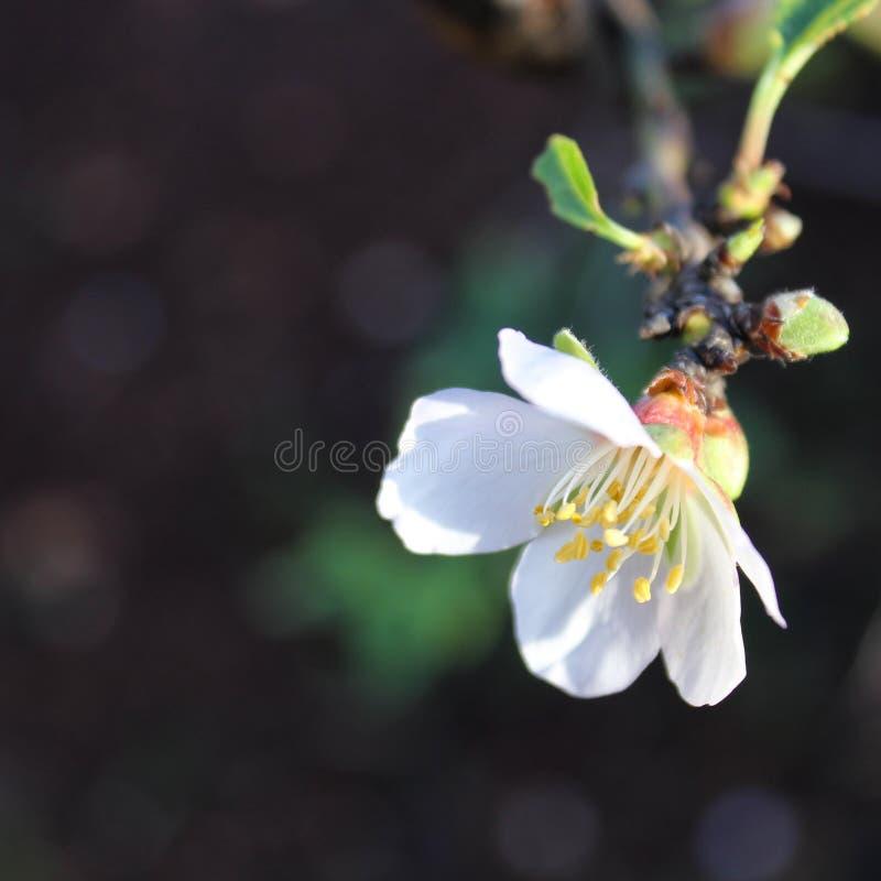 Цветок новорожденного стоковое фото