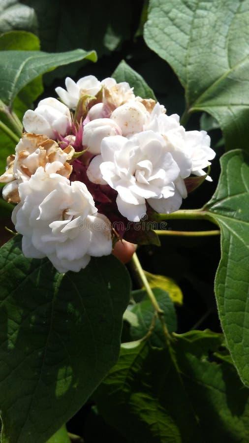 цветок довольно стоковое фото