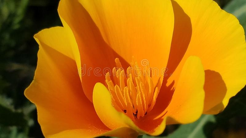 Цветок огня стоковые изображения