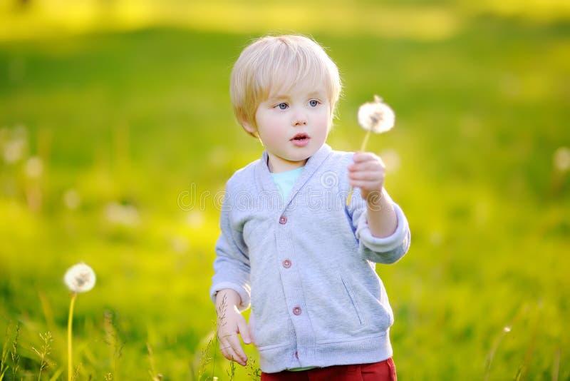 Цветок одуванчика очаровательного белокурого мальчика дуя на солнечный летний день стоковая фотография