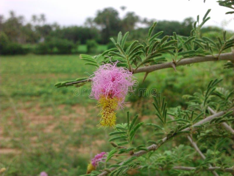Цветок около домашнего сада стоковое изображение