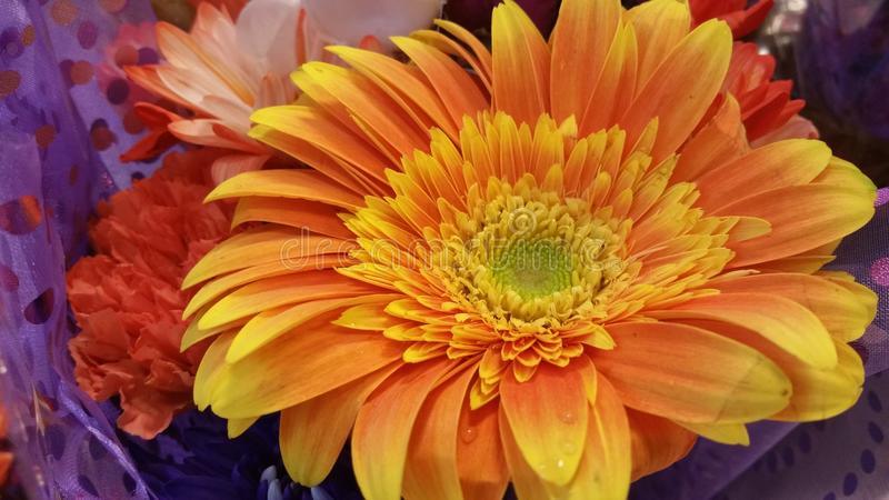 Цветок оранжевого желтого цвета окруженный цветами стоковые изображения