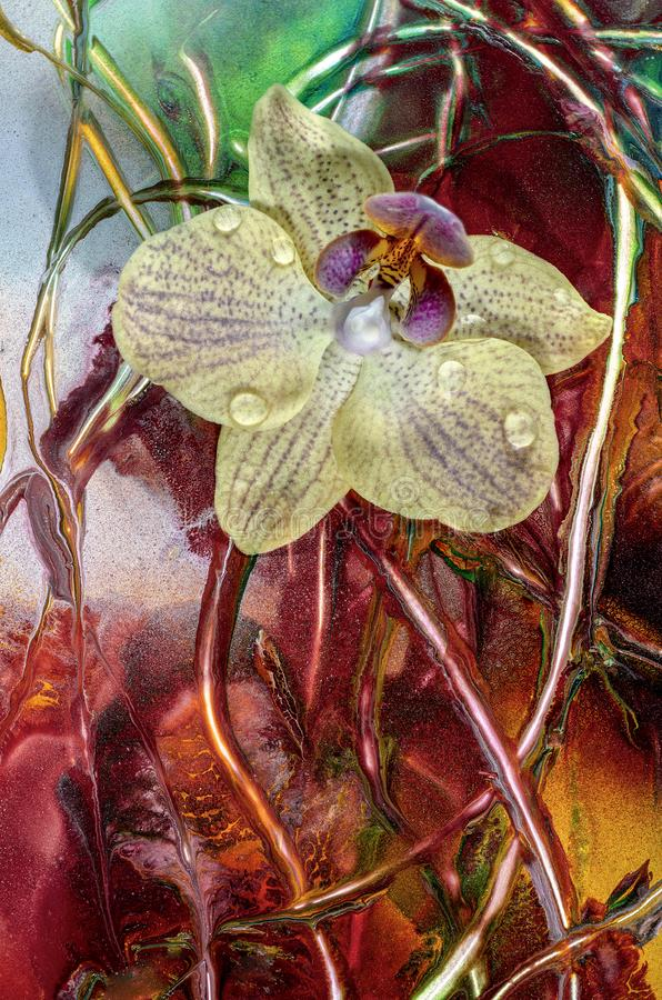 Цветок орхидеи, изображение конца-вверх artisting стоковое фото