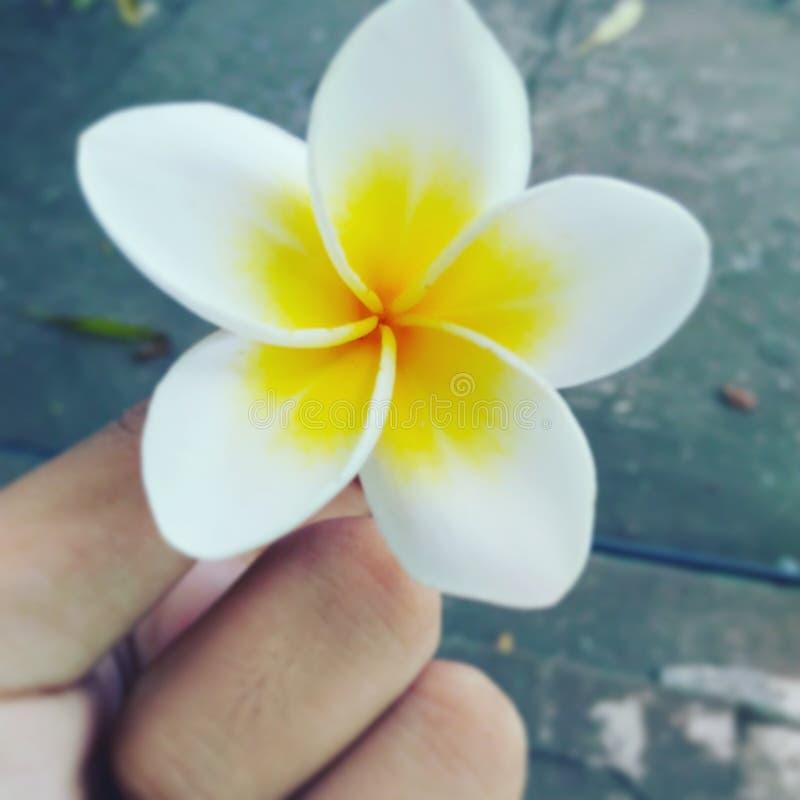 Цветок от школы стоковые изображения