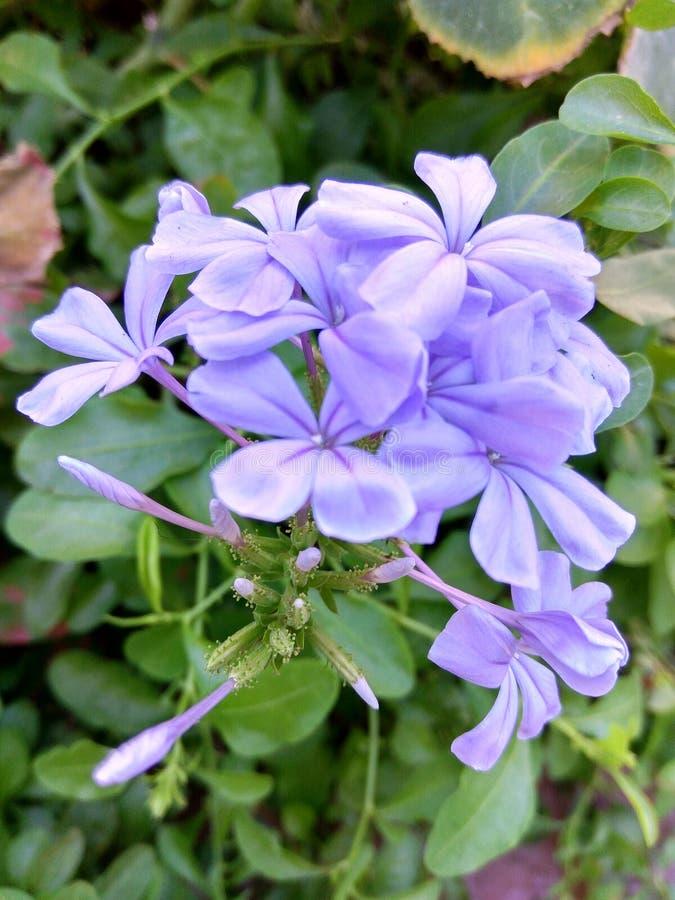 цветок одичалый стоковые фотографии rf
