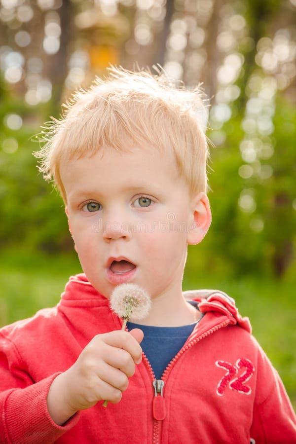 Цветок одуванчика мальчика дуя стоковое изображение rf