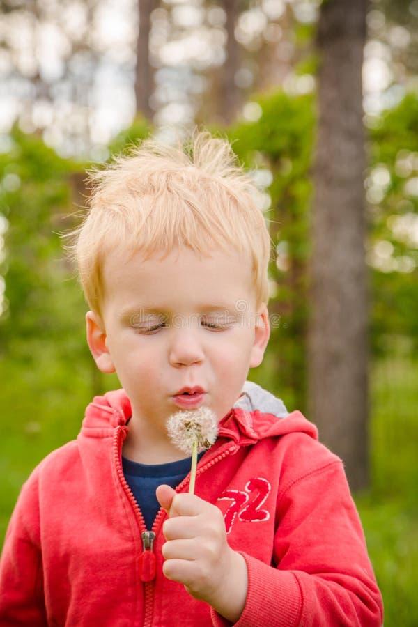Цветок одуванчика мальчика дуя стоковая фотография rf