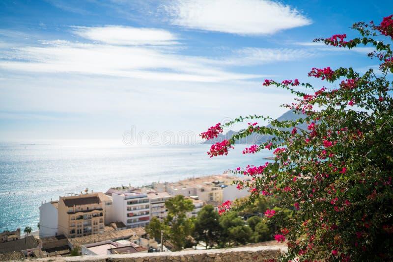 Цветок пинка Altea стоковое фото
