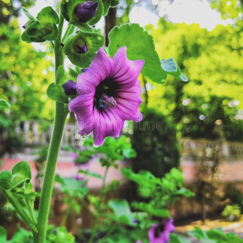 Цветок под солнцем стоковые изображения