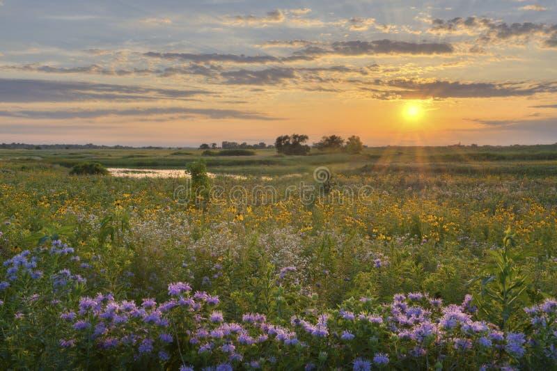 цветок поля над солнечностью стоковое фото