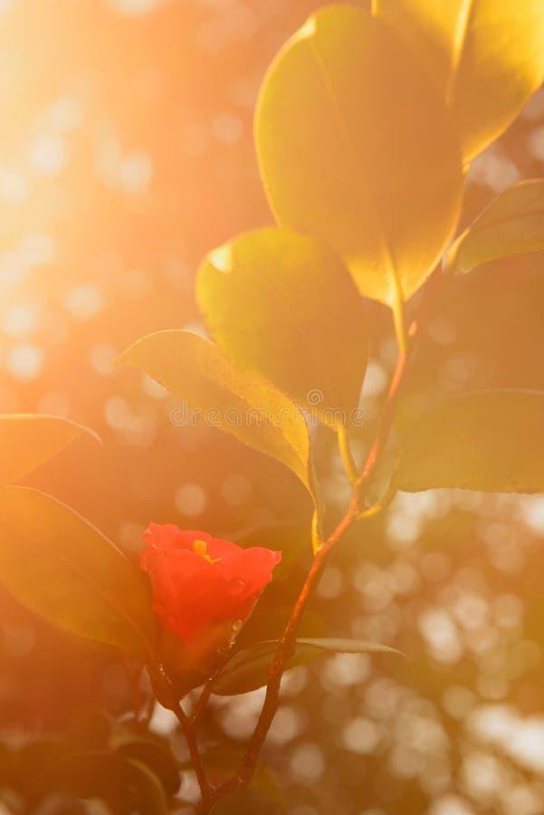 Цветок после дождя стоковое фото rf