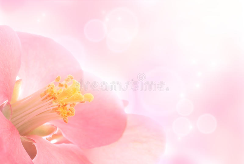 цветок предпосылки стоковые фотографии rf