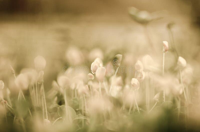 цветок предпосылки цветет сбор винограда стоковое фото