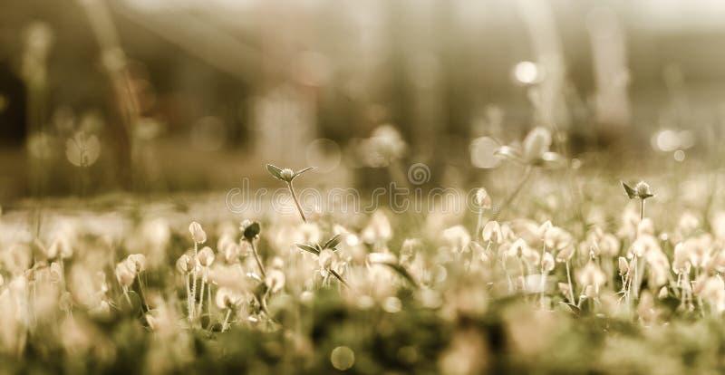 цветок предпосылки цветет сбор винограда стоковое изображение