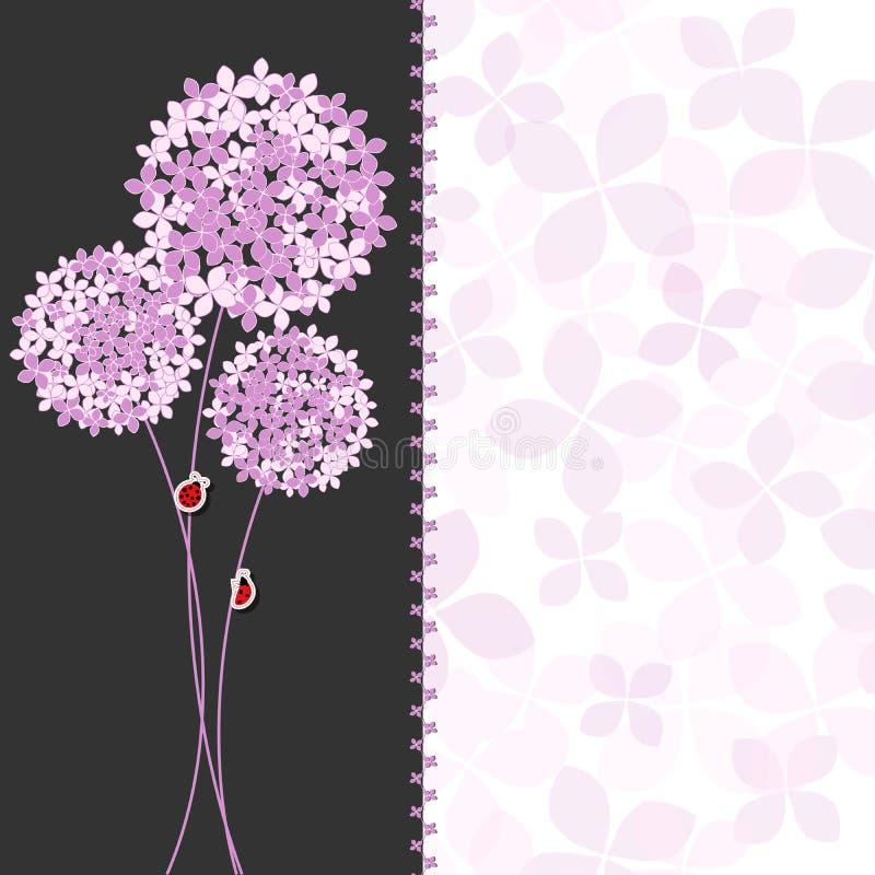 Цветок приветствуя c гортензии весеннего времени фиолетовый розовый бесплатная иллюстрация