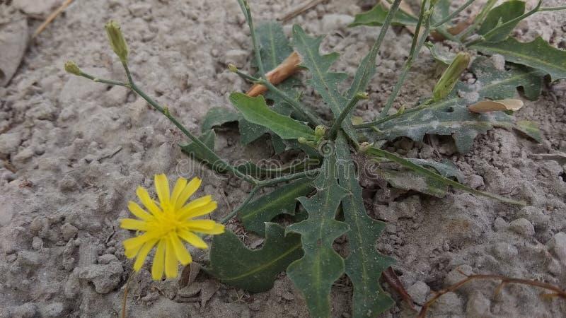 Цветок природы Indain стоковое фото rf