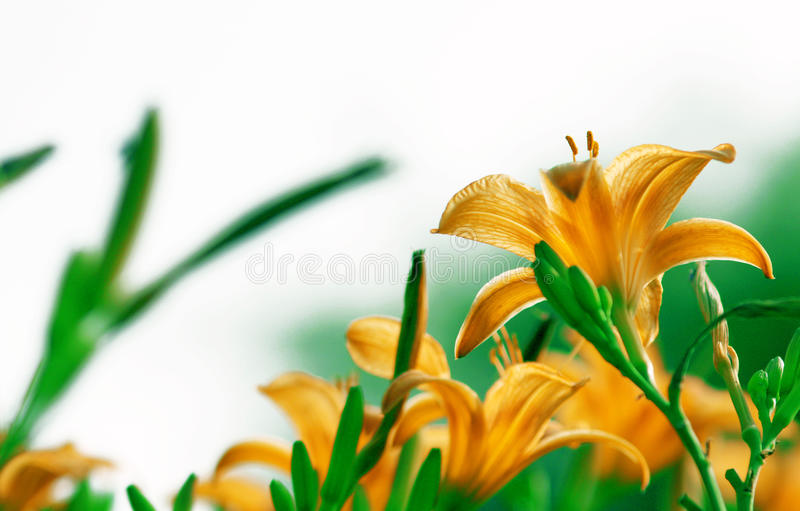 Цветок, природа стоковое фото rf