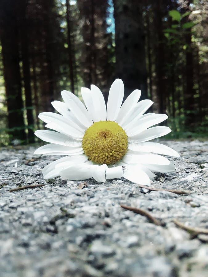 Цветок, природа стоковые изображения
