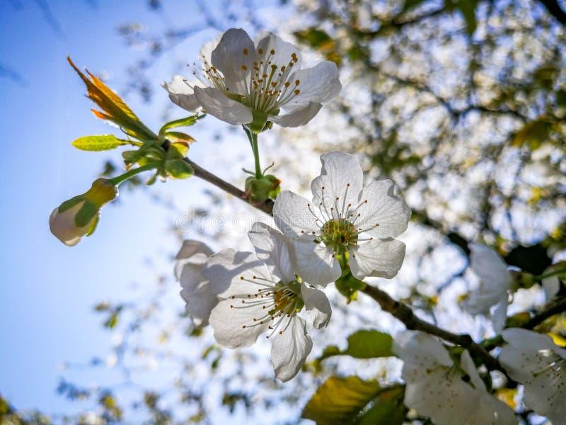 Цветок против весеннего дня солнца стоковые фотографии rf