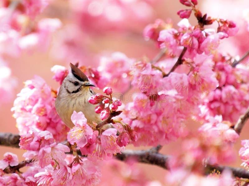 цветок птицы стоковая фотография