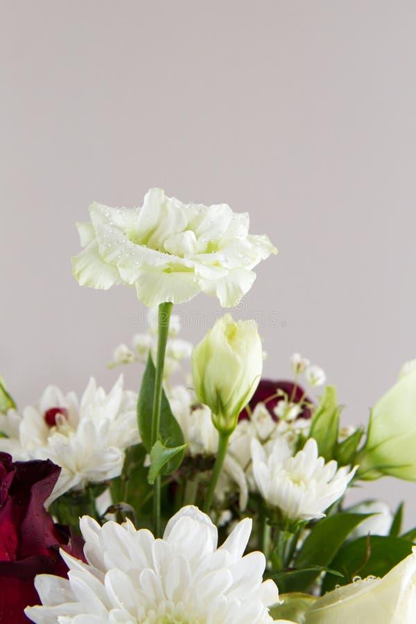цветок пука стоковая фотография rf
