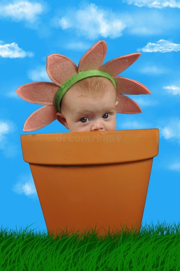 цветок ребенка стоковые фото