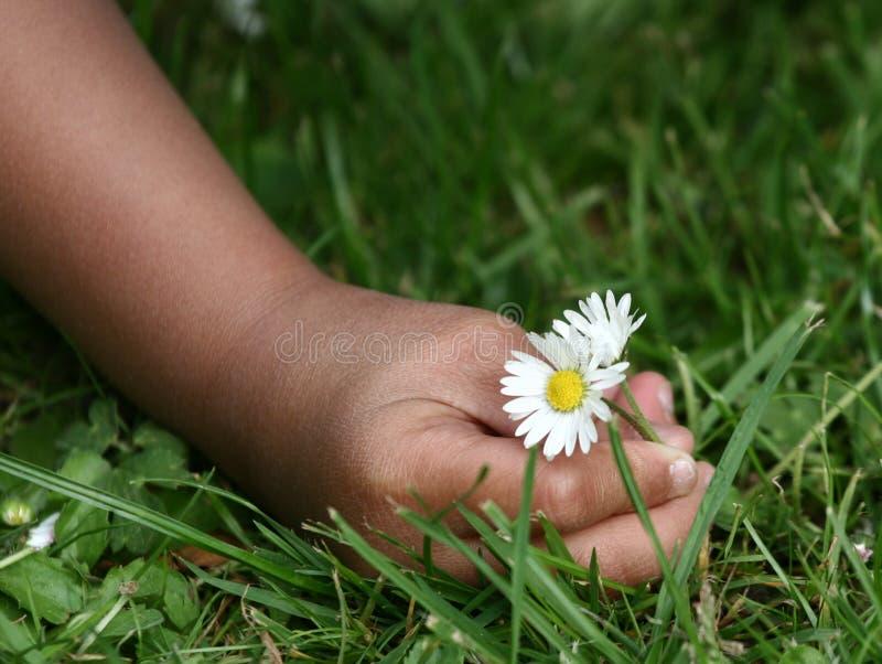 цветок ребенка стоковая фотография rf